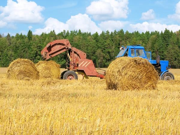 ВДагестане в42 районах аграрии начали заготовлять корма