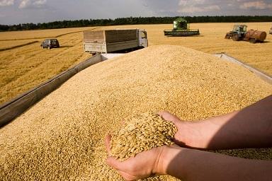 Курская область экспортирует зерно в 20 стран мира