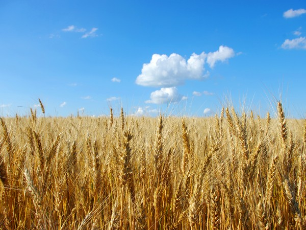 Медведев назвал удачной кампанию поуборке урожая в 2017г.
