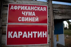 ВЧелябинской области отменили карантин, введенный из-за вспышки африканской чумы свиней