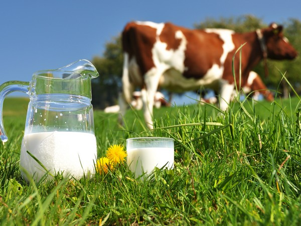 Тюменская область поддержит молочную отрасль впереходный период
