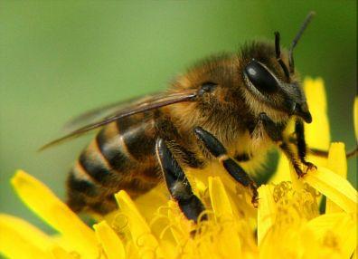 Пчеловодство система удаль
