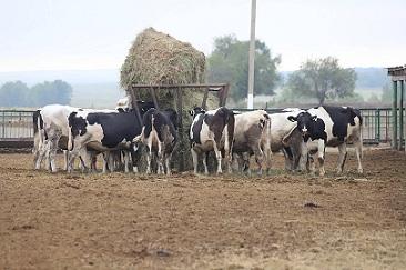 В Оренбургской области осенью откроется новая молочная ферма
