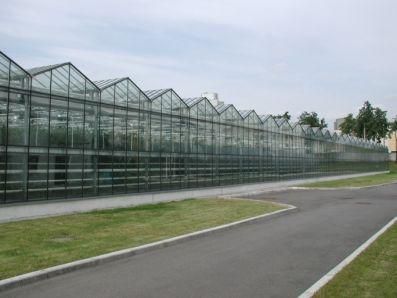 Производитель теплиц построит в Мордовии тепличный комплекс