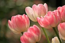 Ульяновской области построят новый тепличный комплекс для выращивания цветов под срезку